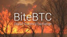 BiteBTCサイトに接続できない状態に